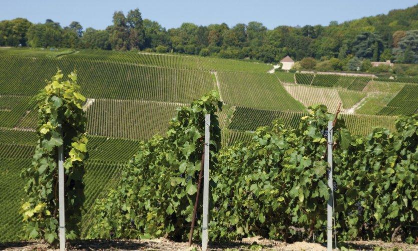 Vignobles de Hautvillers