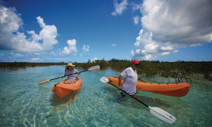 Kayak dans la mangrove.