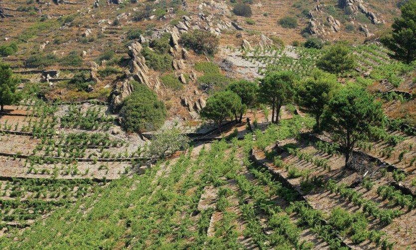 Vignoble des Pyrénées-Orientales