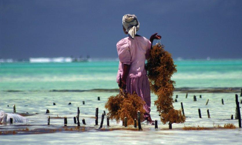Zanzibar: idleness break