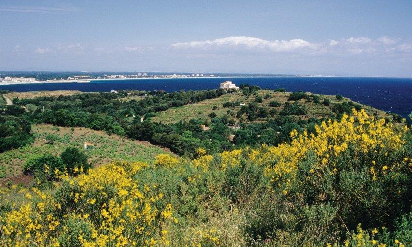 Restaurant Familiale Argeles Sur Mer