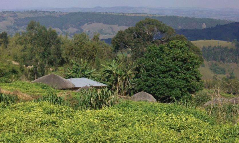 Un rugo dans le Mugamba.