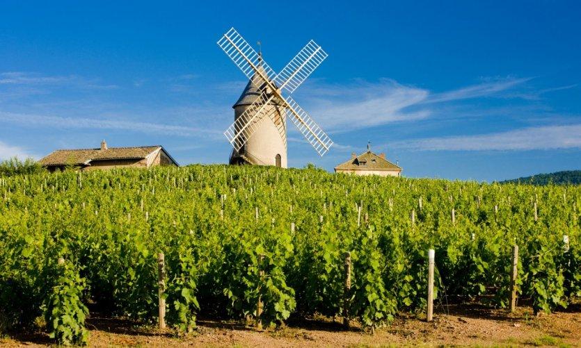 Moulin et vignes de Chénas.