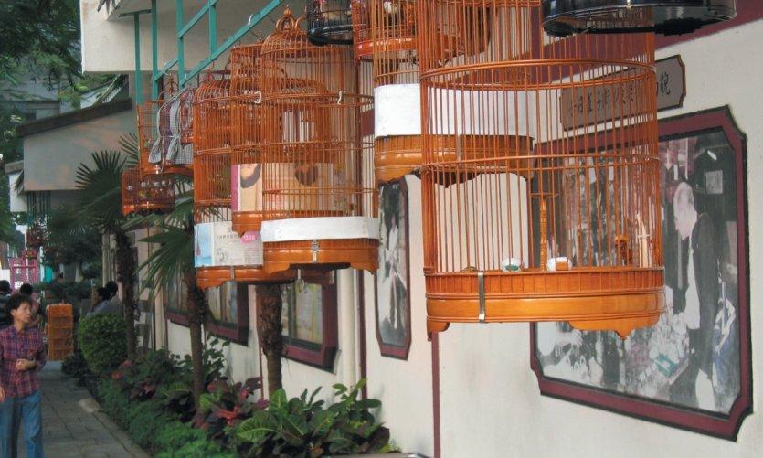 Le marché aux oiseaux, cages suspendues, Kowloon.