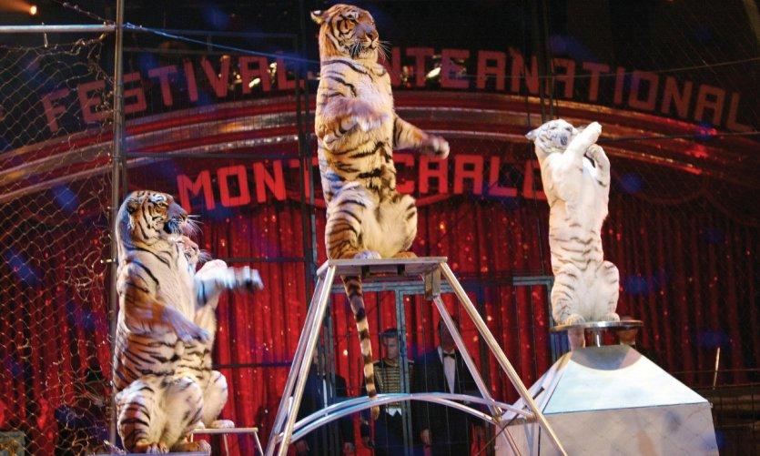 Festival International du Cirque