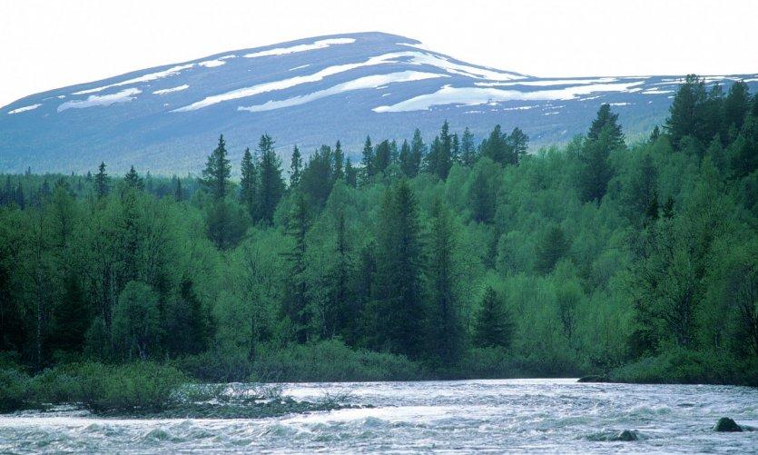 Région d'Ammarnäs.