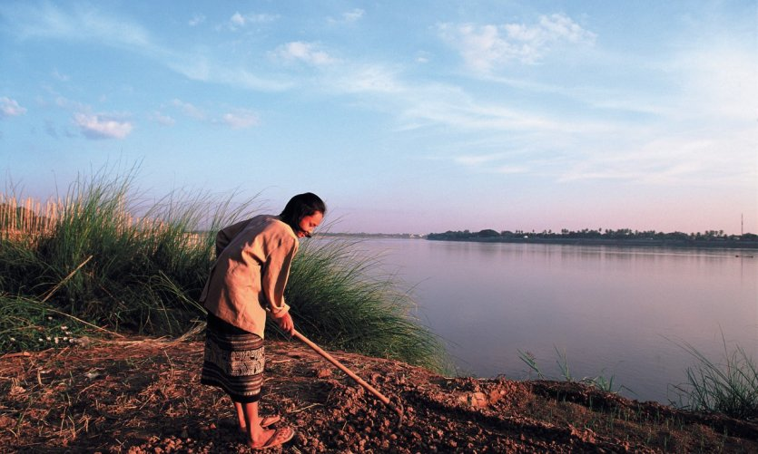 Culture des terres bordant la rivière Mékong.