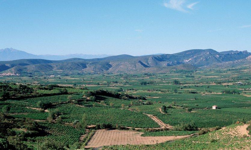 Vue aérienne du vignoble des Corbières