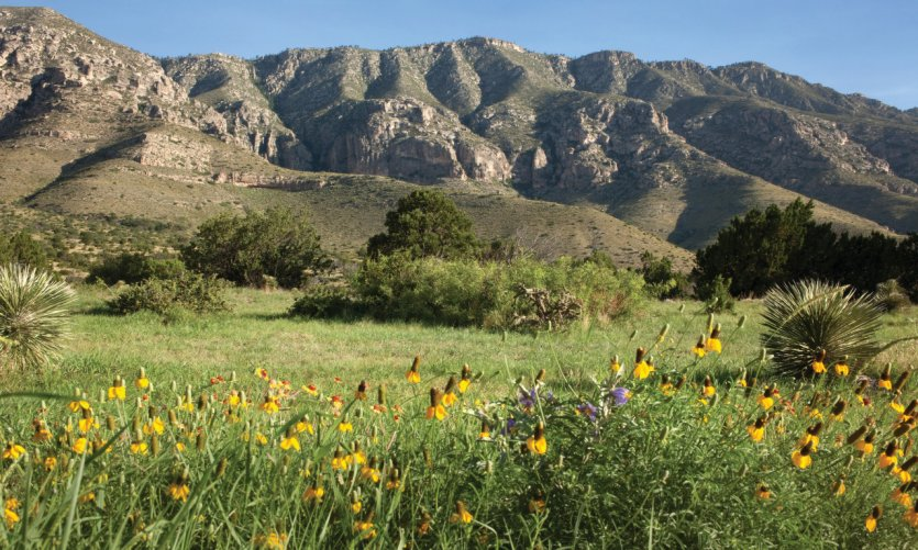 <p>Guadalupe mountains national park.</p>
