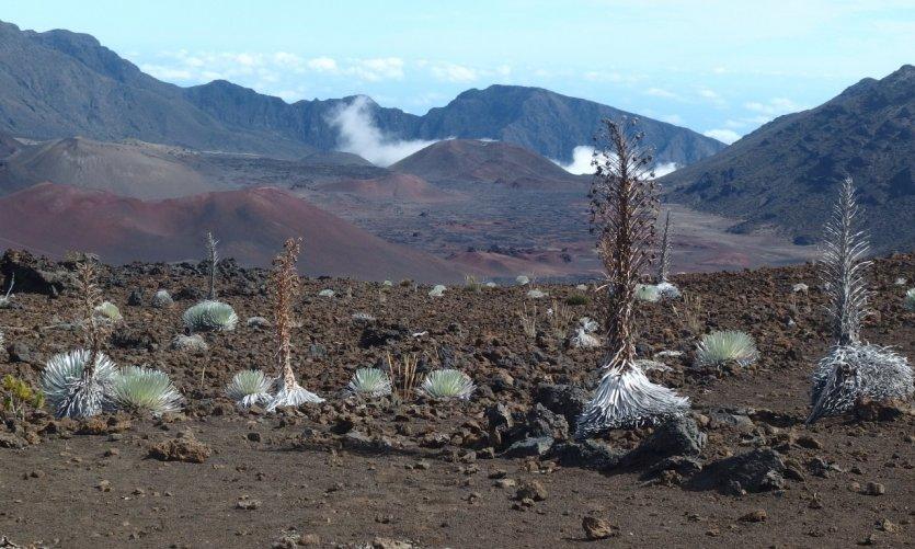 One week on the island of Maui