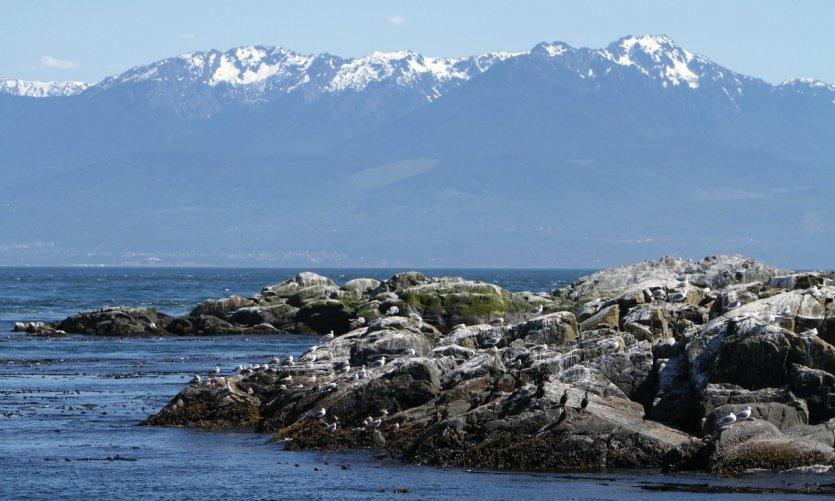 West Coast Trail, une randonnée extrême sur l'île de Vancouver