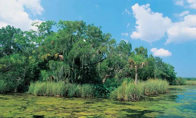 Everglades National Park, Crystal River.
