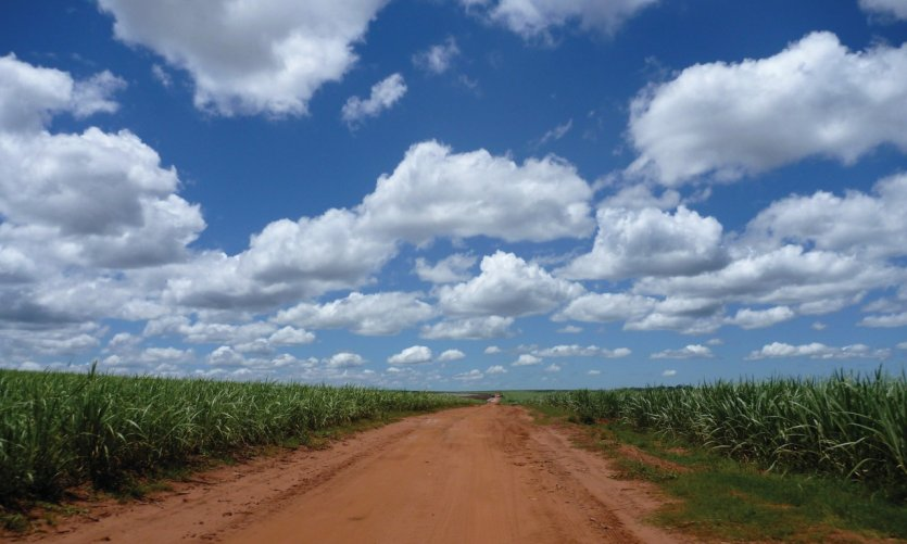 <p>Sugar cane fields in the vicinity of La Colmena.</p>