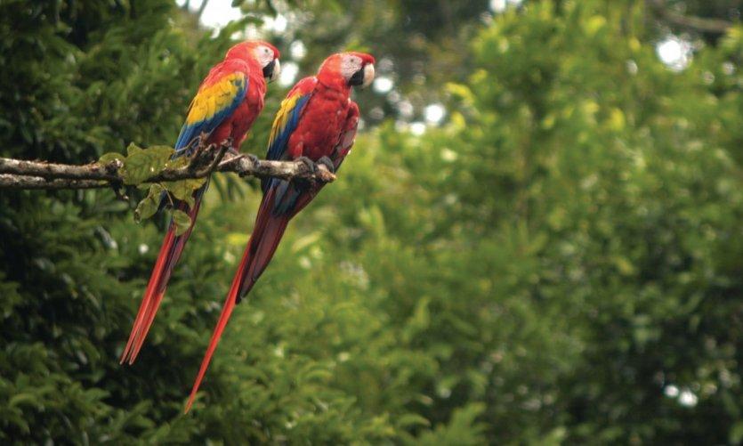 Le Honduras 100% nature