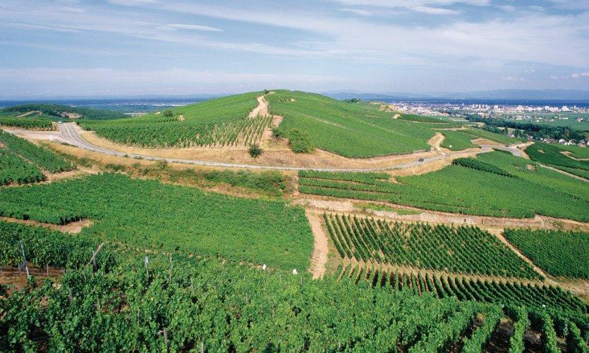 Vignobles de Turckheim.