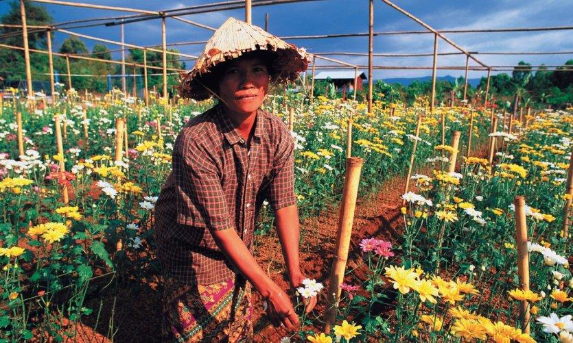 <p>Mujer cultivando flores.</p>