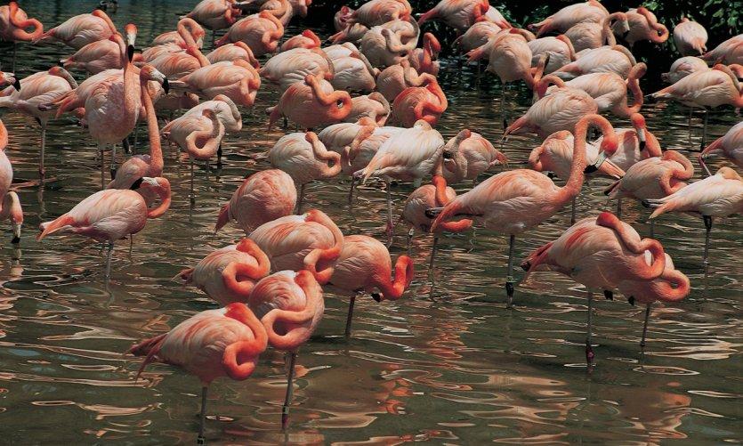 Flamants roses dans l'Everglades National Park.