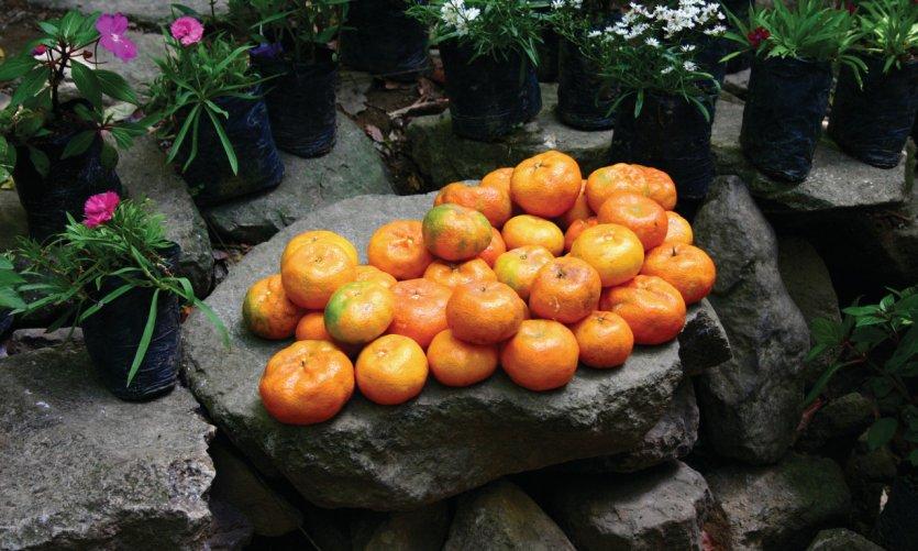 Oranges d'El Valle, province de Coclé.