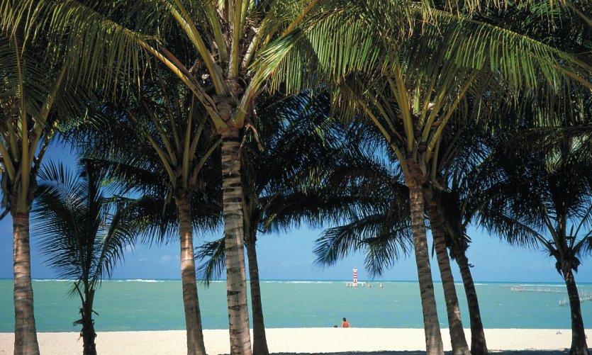 Cocotiers et plage de Maceio.