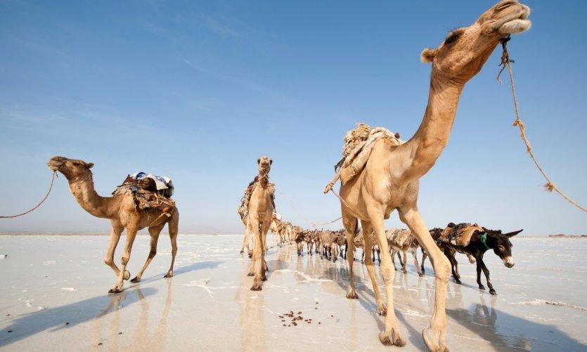 Le nord de Djibouti