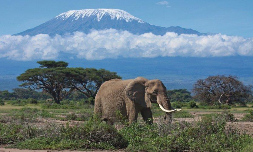 Éléphant dans la région du Kilimandjaro.