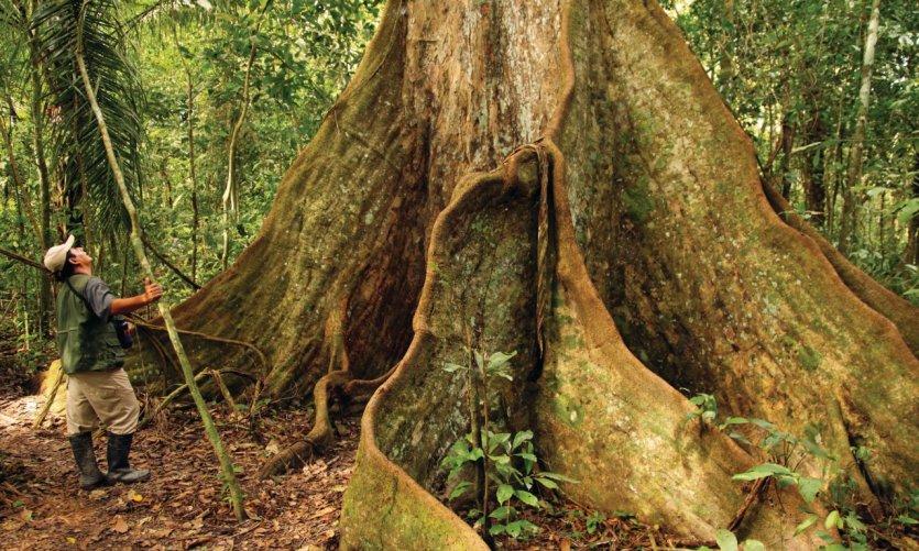 <p>Un árbol impresionante, reserva de Serere.</p>