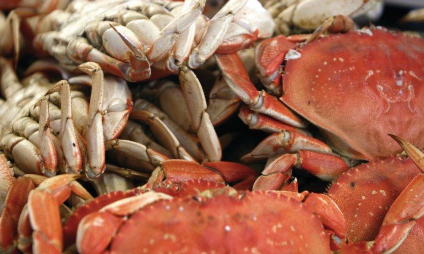 Excellents crabes de San Francisco à Fisherman's Wharf.