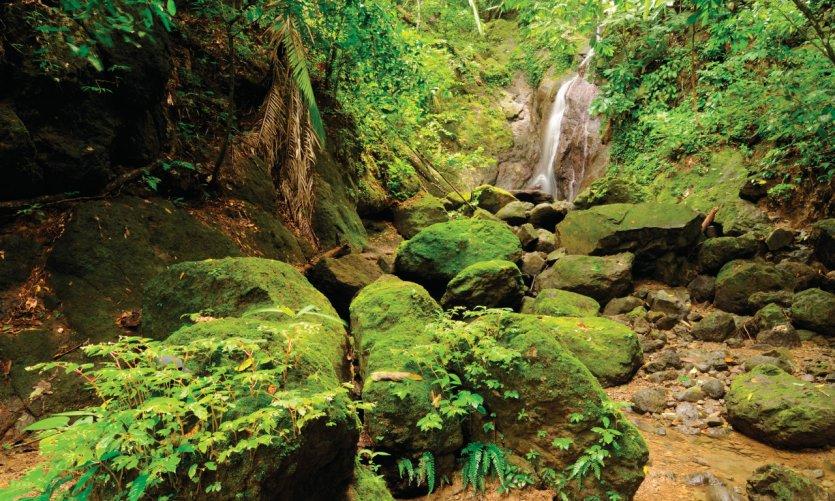 Forêt du Darien, à la frontière colombienne.
