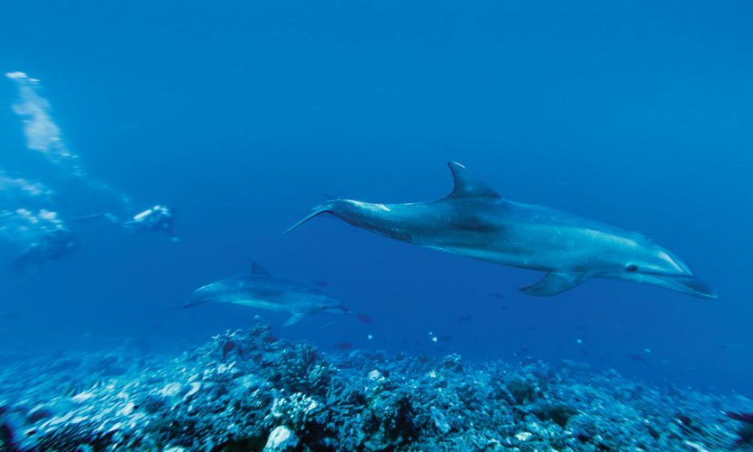 Dolphins in Tiputa Pass