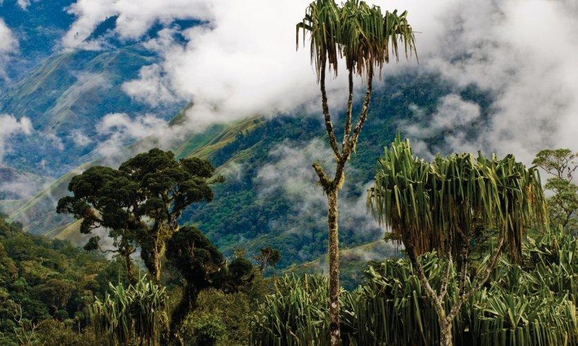 Paysage autour de Menyamya. Au premier plan, des pendanus un arbre extrêmement important dans les sociétés traditionnelles papoues.