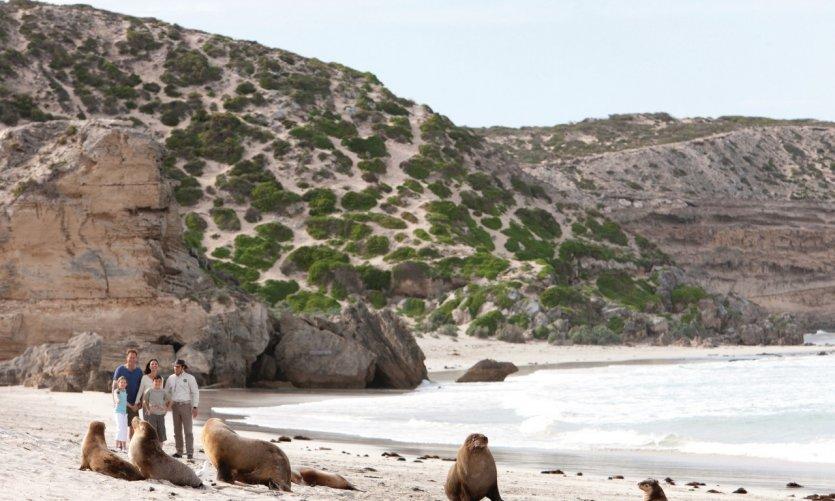 <p>Seal Bay Conservation Park</p>