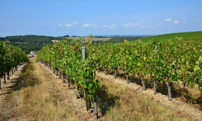 Vignoble de Bruch.