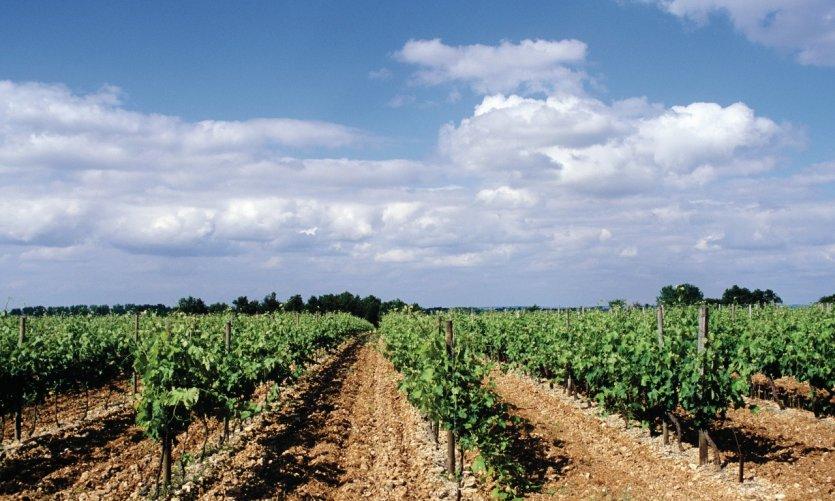 Vignoble de Charente