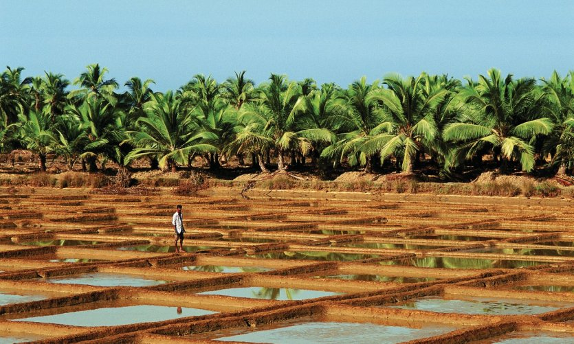 Salines de Goa.