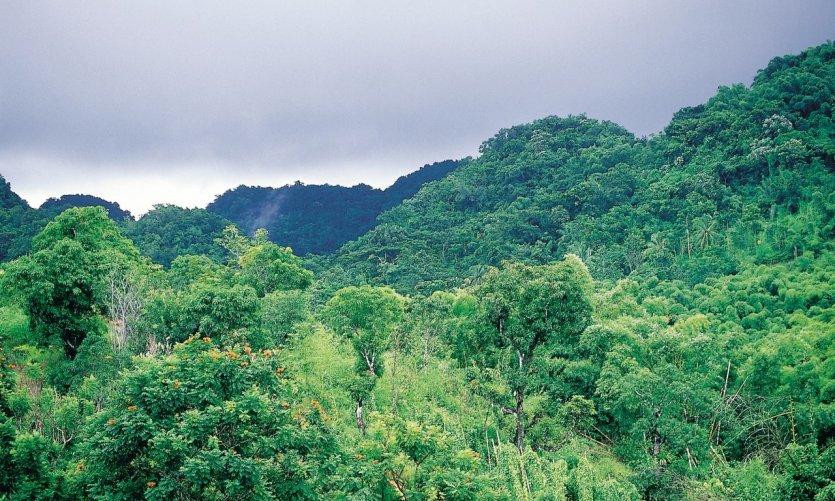 Tropical landscape around Montego Bay.