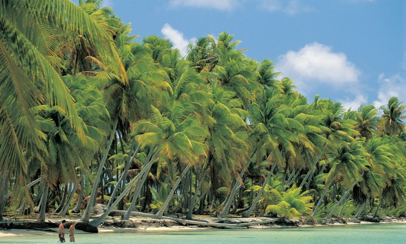 <p>Playa de cocoteros en Nassau.</p>