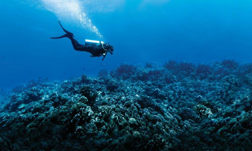 <p>Scuba Diving in Rangiroa Reef</p>