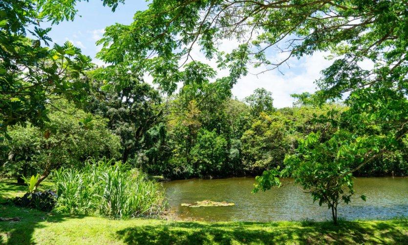 <p>Jardín Balata.</p>