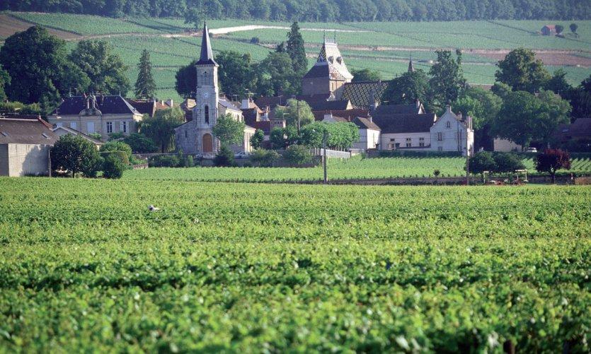 Vue générale d'Aloxe-Corton