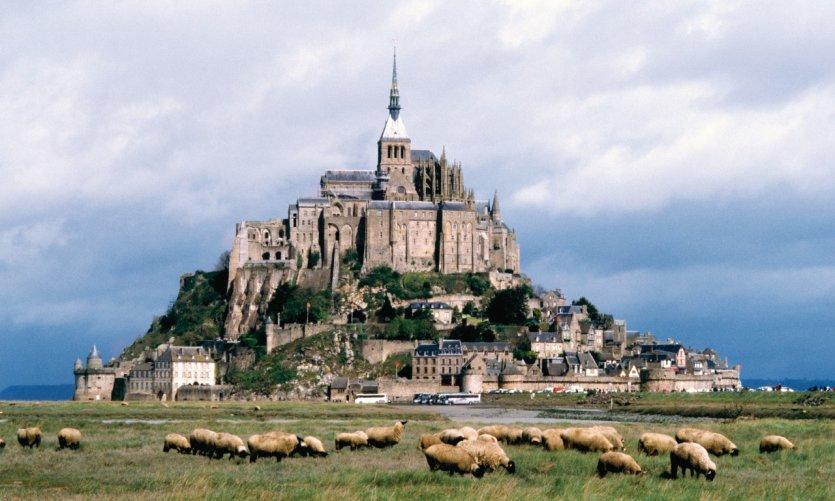 Moutons de pré-salé devant le Mont-Saint-Michel