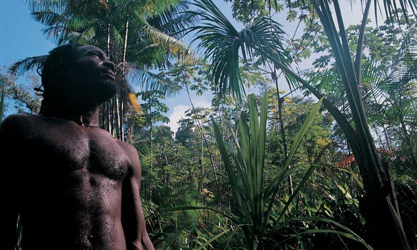 La forêt amazonienne, véritable richesse végétale.