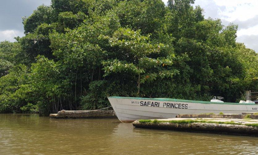 <p>Safari on the Black River.</p>