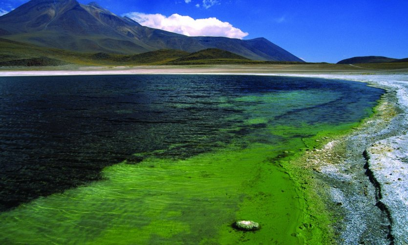 Vue de la Lagune Miscanti
