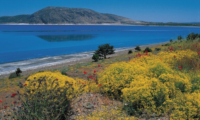La nature reprend ses droits à Pamukkale.