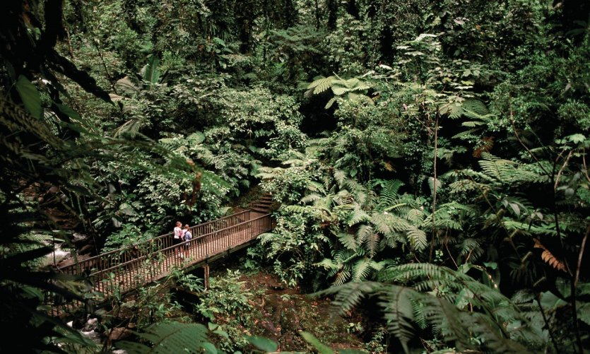 Tropical forest in the National Park of Guadeloupe.