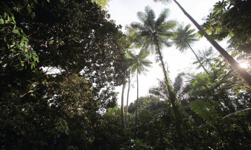 Le jardin botanique d'Eala