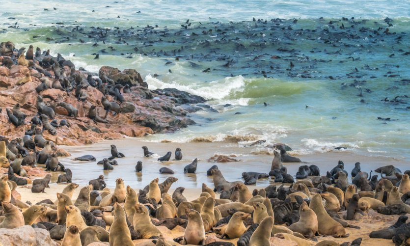 <p>Cape Cross seal reserve.</p>