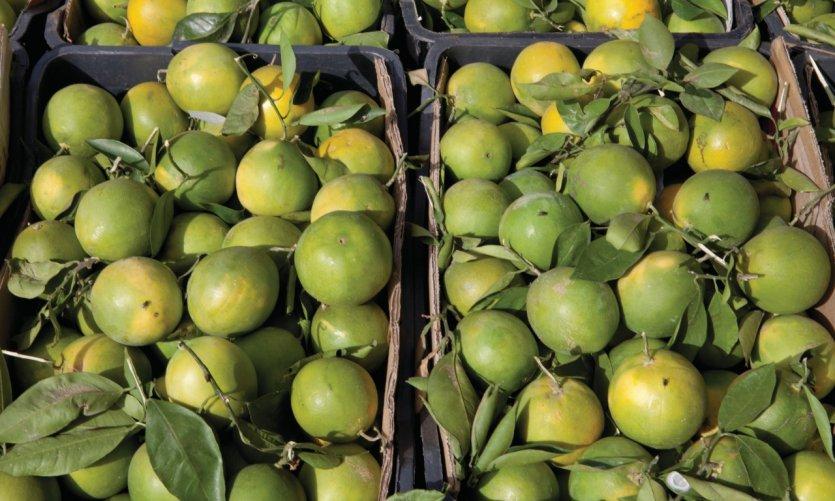 Vente d'oranges