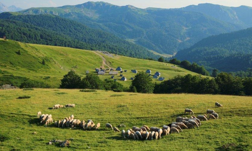 <p>Paysage du parc national de Biogradska Gora.</p>
