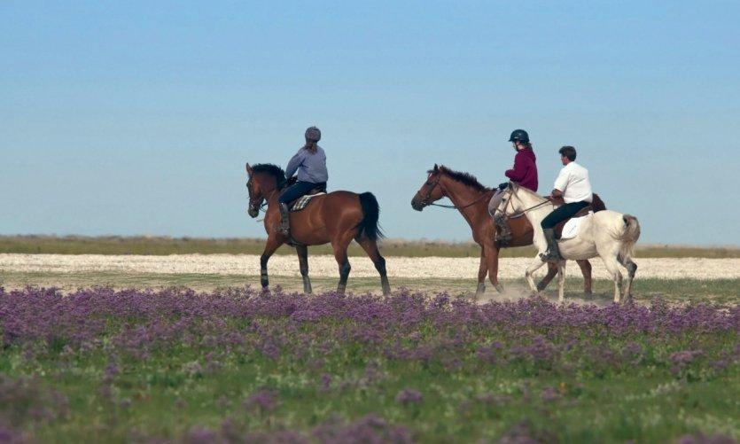 Découvrir la baie de Somme à cheval